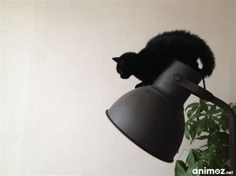 particulier donne chaton bouches du rhone