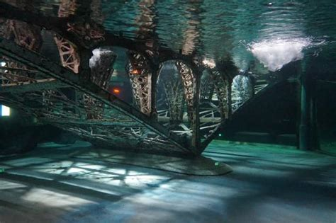 le silurium photo de grand aquarium de touraine lussault sur loire tripadvisor
