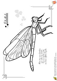 Image result for how to draw a dragonfly side view | Butterfly illustration, Turtle pattern
