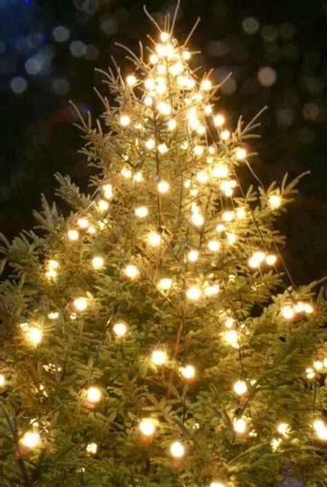 a christmas tree a christmas tree miracle a christmas