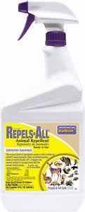 Company Credit Application Bonide Repels All Animal Repellent 32 Oz At Tractor