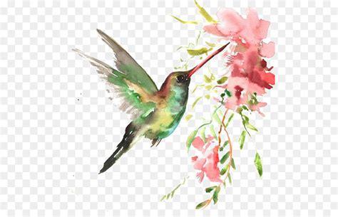 watercolor bird  transprent png