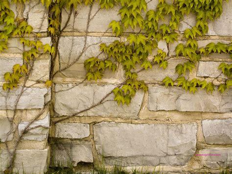 ivy  stone wallpaper wallpapersafari
