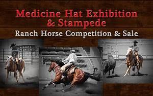 Horse Sale Info. - Medicine Hat Exhibition & Stampede ...