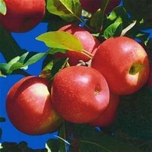 Quand Planter Un Pommier : le jardin loisir les pommiers et poiriers ~ Dallasstarsshop.com Idées de Décoration