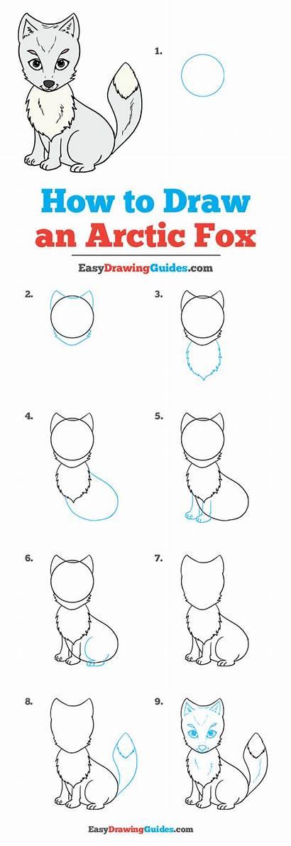 Fox Arctic Draw Drawing Tutorial Easy Printable