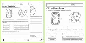 Plant And Animal Cell Diagram Ks3