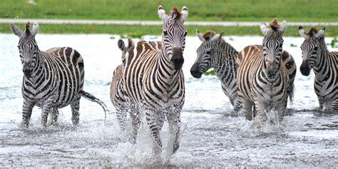 One-Day Admisson to Lion Country Safari   Travelzoo