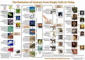 human evolution timeline - Buscar con Google   HISTORY ...