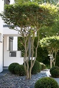 Bäume Für Steingarten : toller baum f r den vorgarten die schirmform der baumkrone sollte definitiv in der ~ Sanjose-hotels-ca.com Haus und Dekorationen