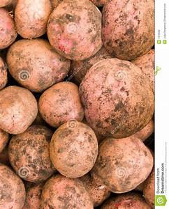 Vegetables A Potato Tubers Stock Images - Image: 7472034