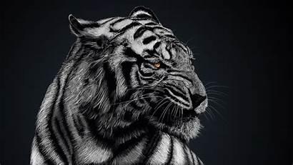 Tiger Animal Wallpapers Animals Background Desktop Backgrounds