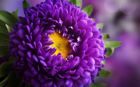 Flower wallpapers hd's main feature is download flower wallpapers hd apk latest version. Purple Flower HD Wallpapers