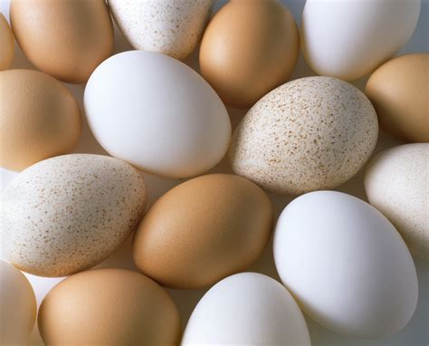 7 Things You Probably Didn't Know About Eggs