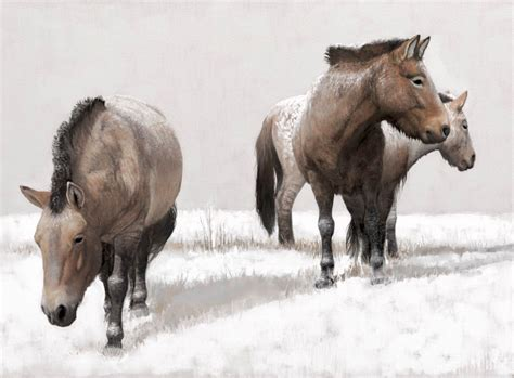 north america horses ice age prehistoric wild extinct years ago lived wildlife went animals europeans introduced early continent mya they