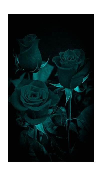Flowers Purple Rose Paradise Soft Gifs Flower
