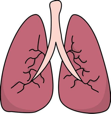 Lungs Clipart Image For Free Lungs Health High Resolution Clip