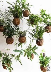 Kokedama Selber Machen : unique kokedama ball ideas for hanging garden plants apartment pinterest ~ Orissabook.com Haus und Dekorationen