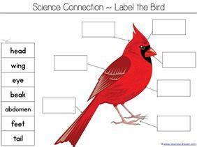 counting    birds kindergarten literature unit