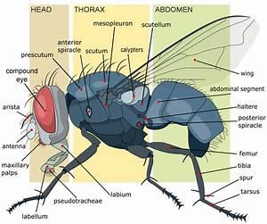 Mutated Flies