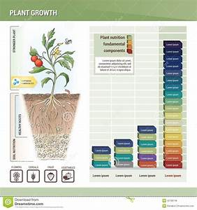 Plant Growth Stock Vector  Image Of Fertilizing  Growing