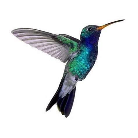 small hummingbird tattoos bing images tattoo