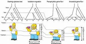 What Is Gene Flow