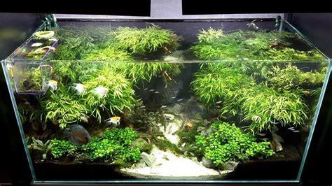 Simple Aquascaping Ideas by Best Aquascaping Design Ideas To Decor Your Aquarium