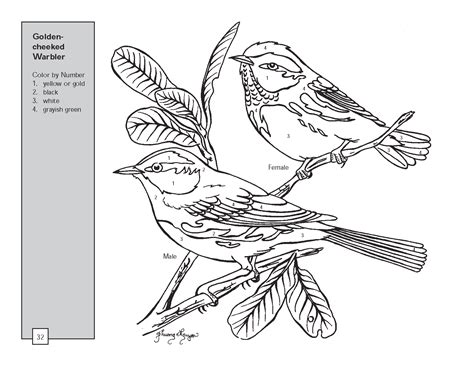 butterfly drawings  color texas warbler bird color