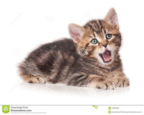 Yawning Kitten Stock Photos - Image: 33299803