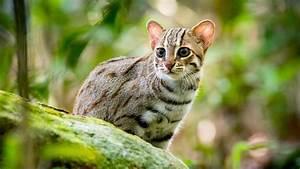 Kleine Fliegen In Der Erde : bilder raubkatzen 1 erlebnis erde ard das erste ~ Frokenaadalensverden.com Haus und Dekorationen