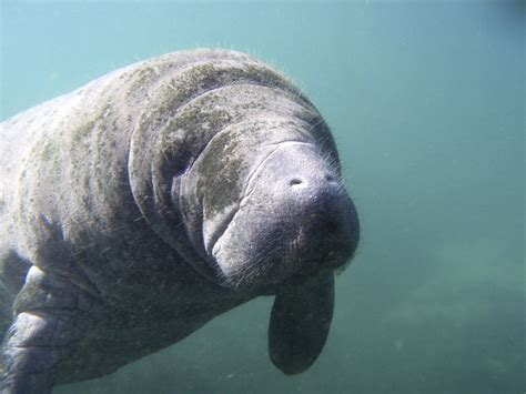 20 Beautiful Animals On The Verge Of Extinction