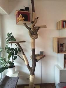 Kratzbaum Aus Baumstamm : 17 id er til kratzbaum selber machen p pinterest selber bauen kratzbaum kratzbaum selber ~ Frokenaadalensverden.com Haus und Dekorationen