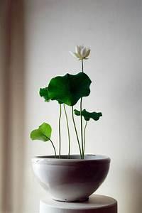 Pflegeleichte Zimmerpflanzen Mit Blüten : 52 frische ideen f r zimmerpflanzen ~ Sanjose-hotels-ca.com Haus und Dekorationen