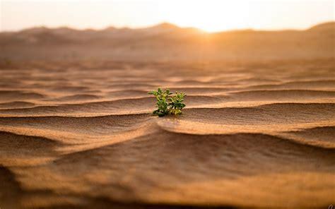plantsleaves depth cool images desert landscapefree