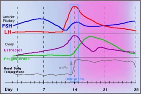 progesterone ovulation  bbt charting wwwearly pregnancy testscom