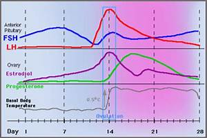 Estradiol Level Chart Progesterone Ovulation And Bbt Charting Www Early