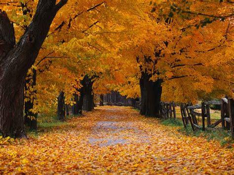 Autumn Windows Xp Wallpapers by Autumn Xp Background Autumn Weddings Pics