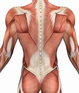 Back Muscles! Overview,Stretching & Strengthening Ex ...
