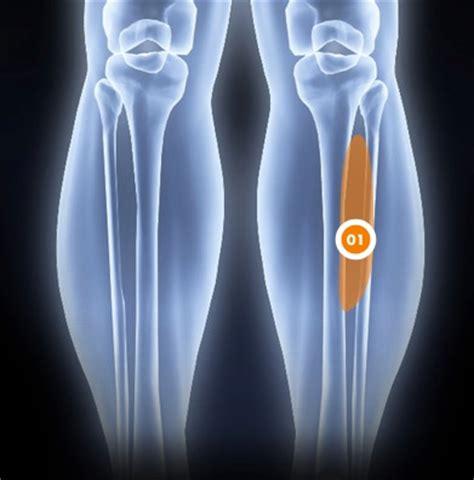tendinite jambier anterieur douleur 224 la jambe orthoaction