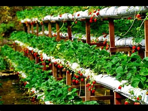 profitable hydroponics organic farming  india dont