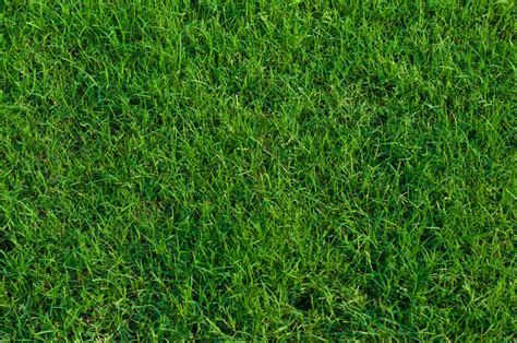 The 6 Most Popular Types Of Grass That Grow In Memphis