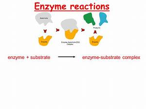 Enzymes Models Of Action - Presentation Biology