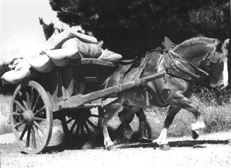 bidet cheval bidet cheval a vendre