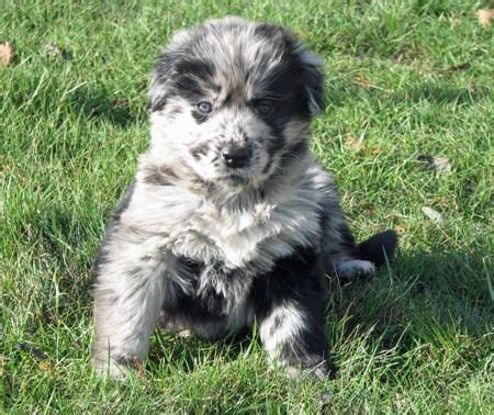 images  mixed breed dogs  pinterest mixed