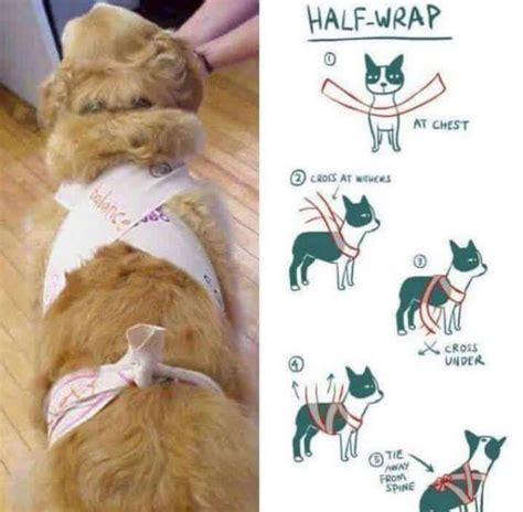 service cats for anxiety a simple scarf may be the solution to your s anxiety