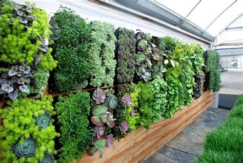 top  plants  vertical garden top  plants