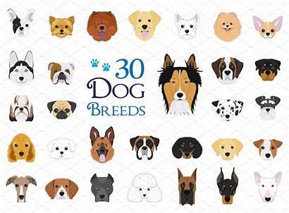 Dog Breeds Vector Different Cartoon Dogs Vectors