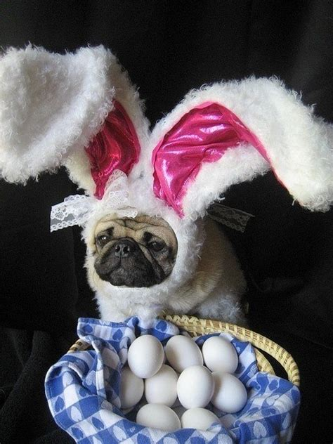 dogs   theyre  easter bunny barkpost