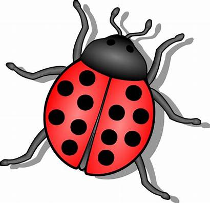 Bug Lady Clip Clipart Clker Bugs Insects